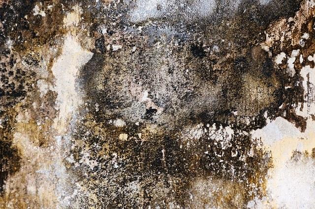Opstijgend vocht zoals schimmels beschadigen je huis